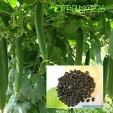 15 Asian Vegetable Edible Luffa seeds , Smooth sponge gourd. Non Gmo.