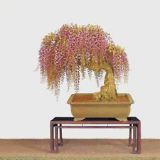 Pink Wisteria Tree 15 Seeds Rare Bonsai Ornamental Plants Seed Home Gardening