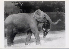 Elephant from Earle's Court Circus,London, 1928•Man in Elephant's Mouth POSTCARD
