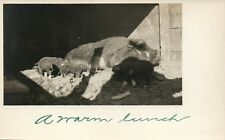 Real Photo Mother Pig and her piglets Michigan MI Postcard