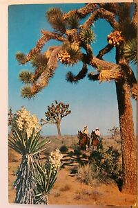 Scenic Joshua Tree Forest Postcard Old Vintage Card View Standard Souvenir Post