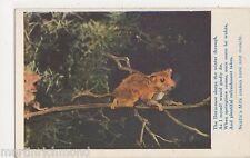 The Dormouse, Nestle's Milk Advertising Postcard, B554