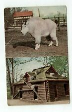 Vintage Post Card New York Zoo Rocky Mountain Goat and Shelter