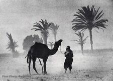 1951 Vintage IRVING PENN Morocco Sandstorm Desert Tiznit Camel Photo Gravure Art