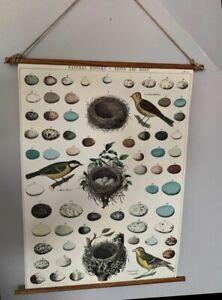 Cavallini Papers Wall Art Scroll Hanging Bird Eggs Identify Chart Ornithology