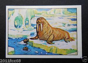 figurines figuren figurer stickers picture cards figurine big jim 163 panini1977