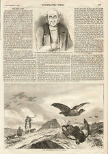 English Black Cock Shooting Retriever Dogs 1855 Original Antique Art Print RARE