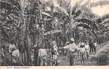 JAMAICA ~ MEN & BOYS AT WORK ON BANANA PLANTATION ~ c. 1904-14