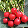 200 pcs / lot red Cherry Radish seeds,vegetable,courtyard balcony potted
