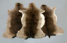 Fallow Deer (Dama Dama) Stag Skin Rug Hide Fur Taxidermy Decor Fireplace Trophy