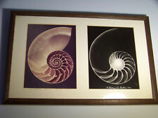 RARE William Conklin Signed and NumberedRadiography Framed Chambered Nautilus