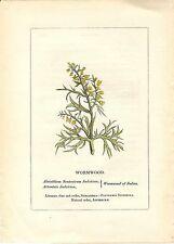 Stampa antica PIANTE DELLA BIBBIA ASSENZIO absinthium 1842 Old antique print