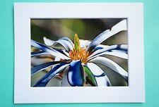 Photo Art Print VanagART New A5 Format Paper Cardboard Purple Flower Gift Decor