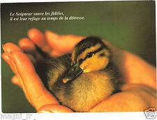 Petit canard   (G9788)