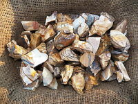 3000 Carat Lots of Picture Jasper Rough - Plus a FREE Faceted Gemstone