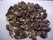 VA Straight From VIRGINIA Two Oz. Thats Right 2 OUNCES of DRIED MOREL MUSHROOMS