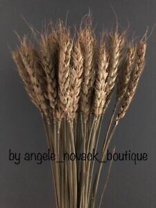 40 PCS DRIED WHEAT STEMS BUNCH WEDDING FLOWERS HARVEST NATURAL DECORATION