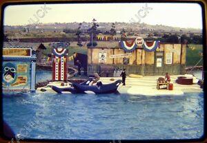 26 Slides SEA WORLD 1974 Orca Whale SHAMU GOES HOLLYWOOD & Sequoia National Park