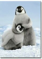 Penguin Noogie Funny Birthday Card - Greeting Card by Avanti Press