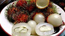 Rambutan Very Sweet 10 New fresh  Seeds 100% ( Better breeds and Edible seeds )