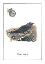 FDC 2792 - Oiseau Buzin sur gravure format A4 !
