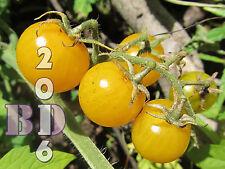 """Tomate """"Golden cono"""" - vegetal - 280 semillas de alta calidad-paquete original _ 84"""