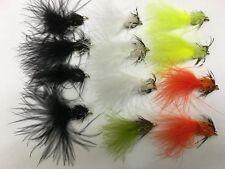 12 Multicolore Loyntons - #8