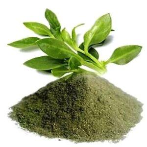 Andrographis Paniculata Kalmegh herb powder best buy 250gm bulk buy farm direct