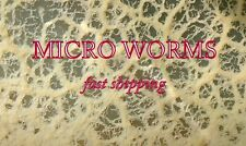 MICRO WORMS STARTER CULTURE LIVE FOOD FOR FISH FRY (Panagrellus redivivus)