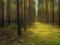 ART PRINT POSTER PHOTO LANDSCAPE ARBOREAL FOREST TREES HAZY LIGHT LFMP1218