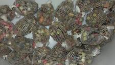 11 mini prefilled  mesh bait balls filled quick melt pk plus 10 pva bags