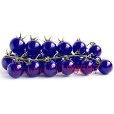 Garden 20 Seeds Purple Cherry Tomato Organic Heirloom Fruit Vegetable Plant Seed