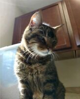 "Have a Heart Auction: Be A ""One-Time"" Loving Sponsor - CHARLIE THE CAT"