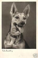4000/ Foto AK, Deutscher Schäferhund, ca. 1930