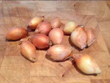 10 jaune pomme de terre Oignons-très rare