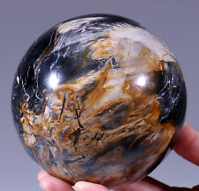 1658g PETRIFIED WOOD FOSSIL AGATE SPHERE Crystal /RoseWood Stand MadagascarMHS