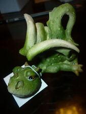 DRAGO draghetto cartoon dragone soprammobile fantasy gotico modellino statua toy
