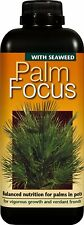 1 litre - PALM FOCUS - Nutrients / Food for Palm Trees / DoctorBlooms