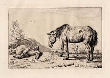 "Detailed 1800s PAULUS POTTER Antique Etching B13 ""La Mazette"" SIGNED Framed COA"