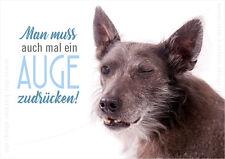 A6 Postkarte Grußkarte Karte Hund Nackthund Man muss auch mal ein Auge zudrücken