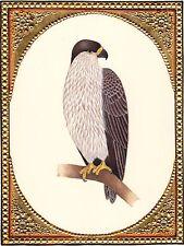 Indian Eagle Bird of Prey Miniature Painting Handmade Watercolor Ornithology Art