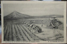 c1920s Growing Rice for use in making E Remy & Co starch advertising postcard