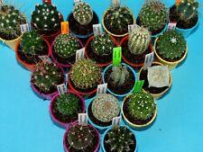 Set of 20 different cactus seedlings! / ARIOCARPUS ASTROPHYTUM obregonia