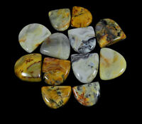12Pcs Natural Crazy lace agate Fancy Cabochon Loose Gemstone 374Cts. Lot S804