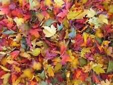 400 Wholesale Artificial Leaf Fake Fall Leaves Wedding Silk Flower Craft DIY