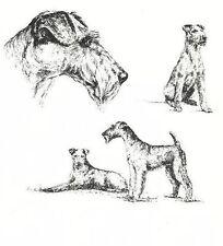 Irish Terrier - 1963 Vintage Dog Print - Matted