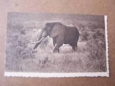 Big Game Safari Africa Elephant Printed Card