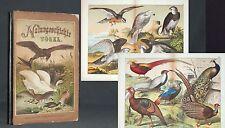 SCHUBERT Naturgeschichte der Vögel 1876 kol.Tafeln Prachtband Ornithologie
