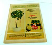 """Squirt The Real Thing for thirst Amazing Offer Citrus Tree Vtg Ad 13.5""""x10"""" AK"""