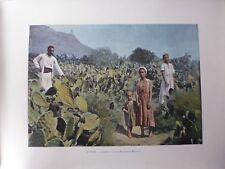 ALGERIE/Gravure 19°in folio couleur/ Champs de Cactus (Figuiers de Barbarie)